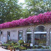 Falls Florist _ Greenhouse.jpg